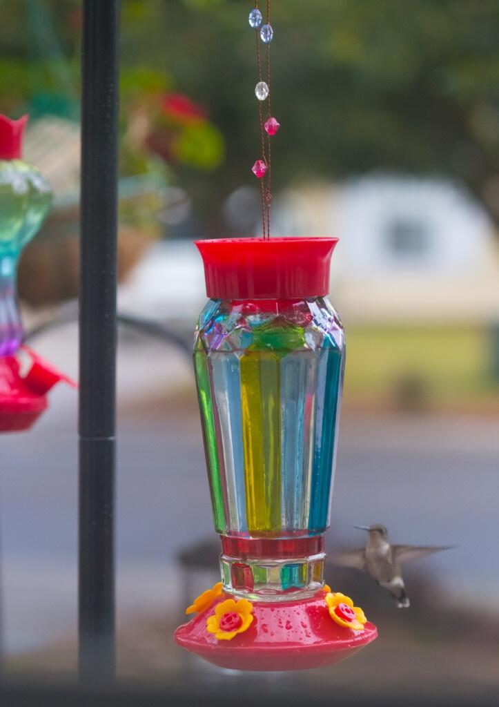 hummingbirds eating homemade hummingbird nectar from a feeder