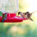 four hummingbirds around a hummingbird feeder